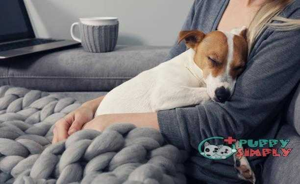 Cozy home woman covered with warm blanket watching movie hugging sleeping dog. Relax carefree comfort lifestyle. how long does a female dog stay in heat