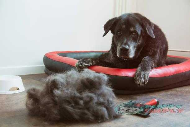 Heap of dogs hair and a sad dog best brushes for shedding dogs