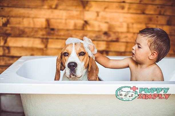 Let's clean you up best smelling dog shampoo