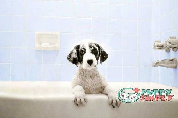 Puppy in Bathtub best smelling dog shampoo