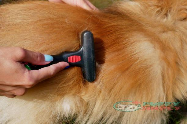 combing the dog's hair with a comb best brushes for shedding dogs