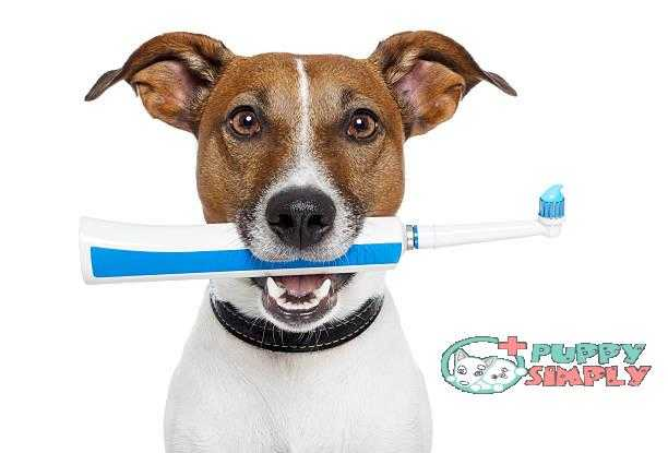 dog with electric toothbrush best dog toothpastes