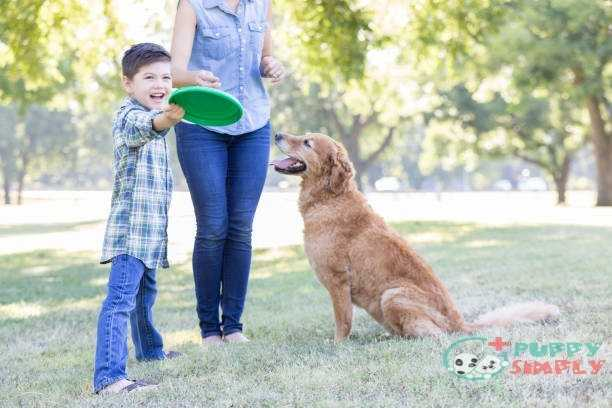 A boy and his dog play in the park together best frisbees for dogs