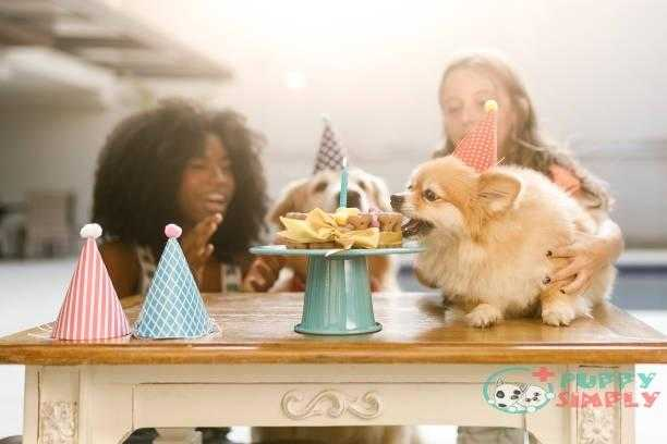 Dog stealing a piece of cake Long-Term Costs For Ownership