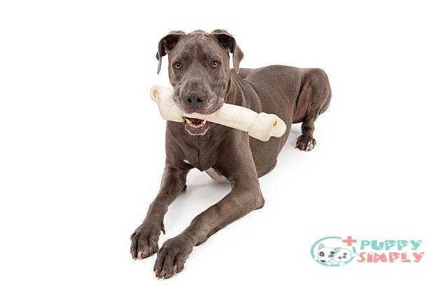 Things To Look For In the best rawhide for dog