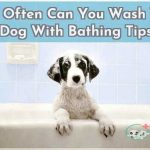 How Often Can You Wash Your Dog With Bathing Tips