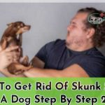 How To Get Rid Of Skunk Smell On A Dog Step By Step 2019