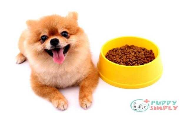 Pomeranian dogs and dog food on a white background. Long-Term Costs For Ownership