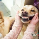 how many teeth do dogs have