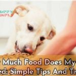 How Much Food Does My Dog Need Simple Tips And Tricks