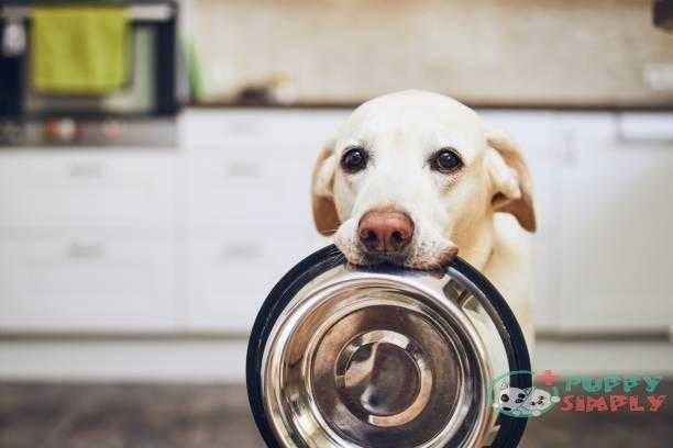 dog waiting for feeding - dog feed s and pictures Relation To Your Dog's Age Adult dogs