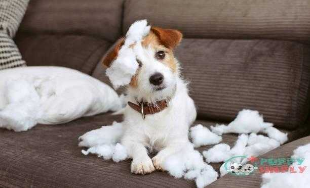funny dog mischief. naughty jack russell home alone after bite a pilow. separation anxiety concept - dogs happy s and pictures Can Puppies Be Left Alone?