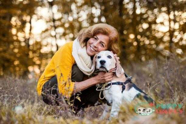 a senior woman with a dog in an autumn nature at sunset. - dog's life span s and pictures how long is a dog's life span