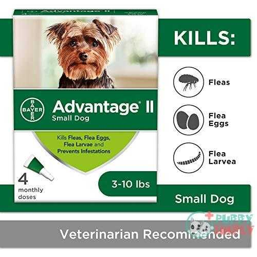 Advantage II 4-Dose Flea Treatment