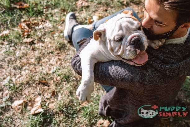 man and dog enjoying sunny day in nature - english bulldog stock pictures royalty-free photos & images English Bulldog