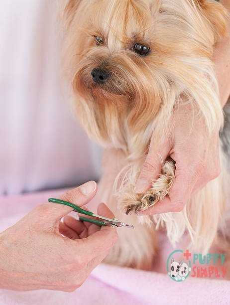 What to Look for in a Dog Nail Clippers