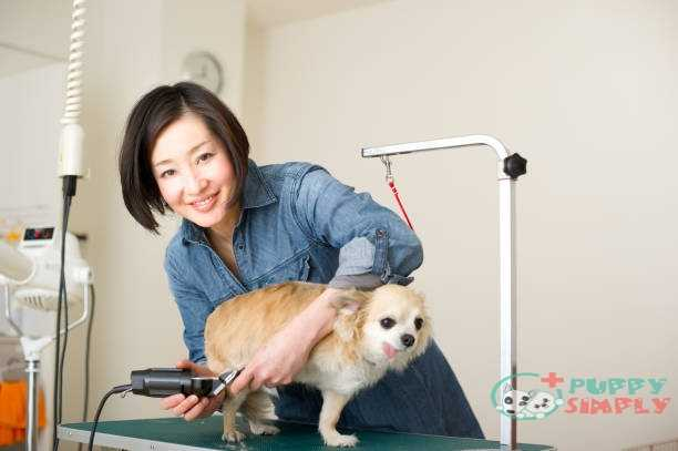 Important Features To Consider When Buy Dog Clippers