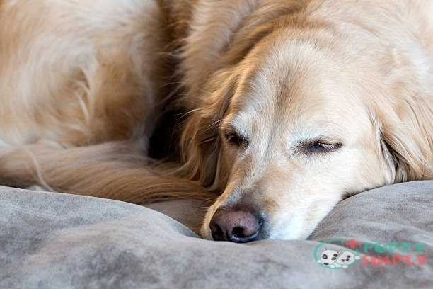 Why Dogs Need The Right Bed?
