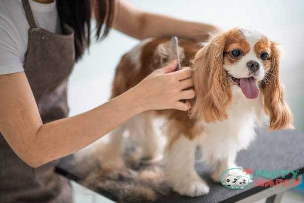 How often should you brush your dog?