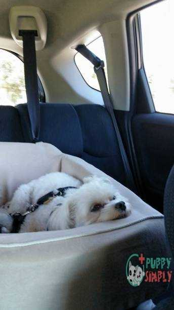 Important Features To Consider When Choosing The Best Dog Car Seat