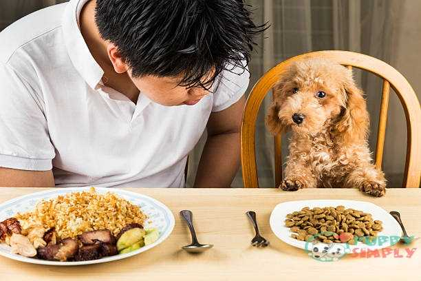 Encourage Your Picky Eater Dog To Develop Healthier Eating Habits