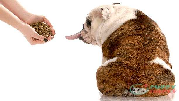 Things To Consider When Look For Dog Foods For Picky Eaters