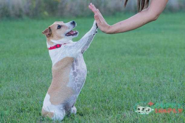 How To Teach A Dog To Shake With Each Leg