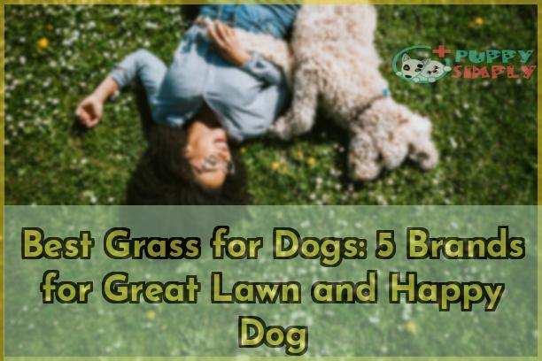 Best Grass for Dogs 5 Brands for Great Lawn and Happy Dog