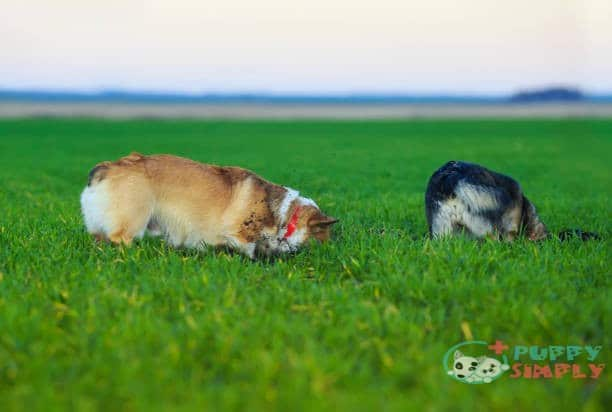 How to Preventing Your Dog's Digging From Killing the Grass