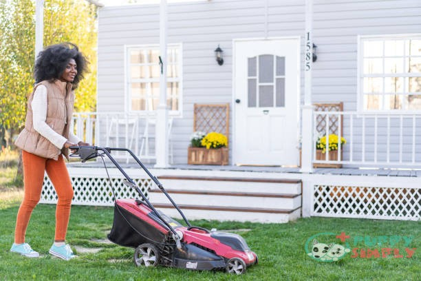 Keep The Lawn Healthy