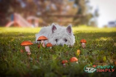 When Are Mushrooms Bad for Dogs?
