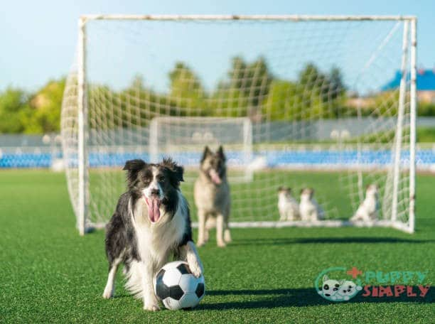best grass for dogs