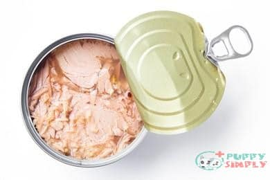 Can Dogs Eat Tuna Canned?