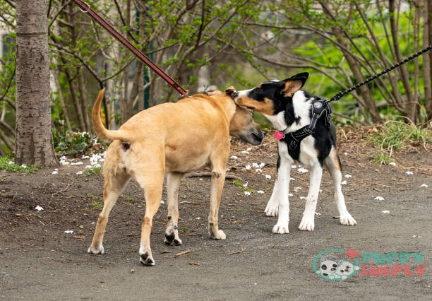 why dogs tend to circle each other before the meeting