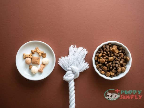 best food bowls for dogs