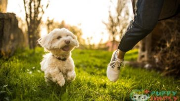 best off leash dogs that stay close to owner