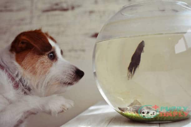 What Types of Fish Can Dogs Eat?