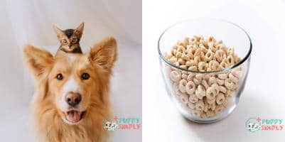Can Dogs Eat Cheerios?